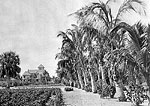 Palm-Lined Grounds With House in Background, 1896
