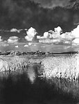 Clouds Over the Everglades, 1950