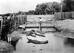 Florida Alligator Farm, c1900